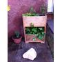 Huerto Vertical Hierbas Aromaticas Y Medicinales 6 Plantas