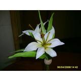 Lilium En Porcelana Fria