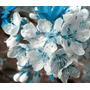 16 Sementes Sakura Azul Raras Pra Bonsai Jardins Gramas Flor
