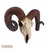 Enfeite Resina Crânio Caveira De Bode Oldway - 33cmx41cmx13