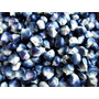Maiz Azul 20 Semillas Hortaliza Fácil Sol Sdqro