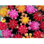Cactus Injertados /cactus Y Suculentas De Coleccion