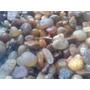 Piedra Natural Decoración Jarrones Cactus Canto Rodado 1 Kg