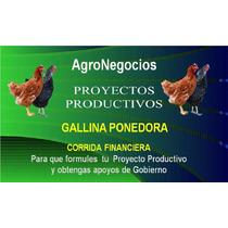 Corrida Financiera Gallina Inicia Negocio Proyecto Productiv