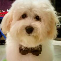 Collar Mascota Con O Sin Cascabel Perro Gato Conej Uron Moño