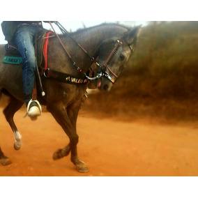 Cavalo Quarto De Milha-potra Muito Inteligente Vaquejada