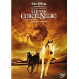 Dvd - O Jovem Corcel Negro - Walt Disney - Original Novo