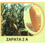 Maiz Amarillo Hibrido Zapata2 1kg Semilla Para Forrajes