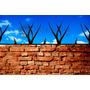 Pinches De Seguridad Perimetral Proteccion Muros Puntas Puas
