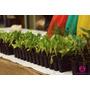 Plantines De Verduras, Hortalizas Y Plantas Aromaticas
