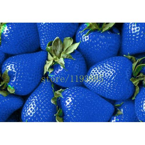 Sementes De Morango Azul 50 Sementes