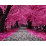 Sakura Bonsai Cerezo Japones Arbol Semillas