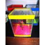 Beteira Amarela 10x10x15 Completa Sem Peixe Vivo