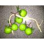 Frutas Decoracion Centro De Mesa Riesta X 6 Manzanas Verdes