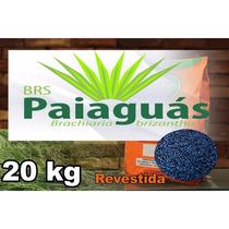 Brachiaria Brizantha Cv. Brs Paiaguás 20kg Revestida