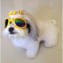 Óculos De Sol Para Cães Com Proteçao Uv - Pronta Entrega