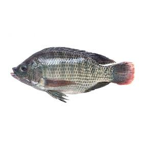 Pescado Mojarra Tipo Tilapia Premium (sin Visceras)