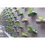 Guía De Cultivos Hidroponicos