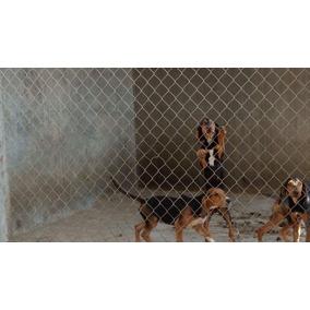Cachorros Sabuesos Para Cacería