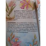 Libro De Orquideas En Ingles
