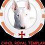 Filhote Bull Terrier Inglês Canil Royal Templar