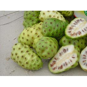 Frutales: Noni Planta Fruta Medicinal
