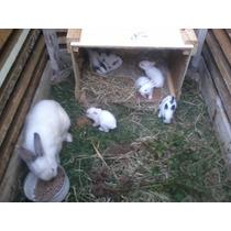 Coelha Com Filhotes