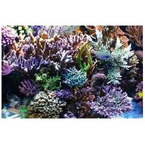 Sal Tropical Saco 25kg - Ideal Para Aquario Marinho