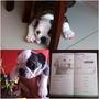 Bulldog Ingles Cachorros Pedigree Plata