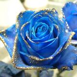 Semilla Rosa Azul Borde Dorado Flores Raras 10 Semillas