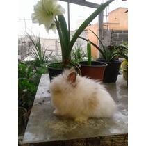 Conejosenanos Cabeza León --doble Melena