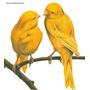 Hormônio Feromônio Pássaro Canário Belga Indutor Canto
