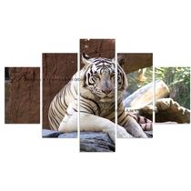 Cuadro Decorativo Tigre Blanco Tigre De Bengala Jaguar León
