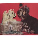 Yorkshire Terrier Fuente Decorativa Electrica