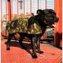 Capa/ Campera/abrigo Para Perros. Good Looking