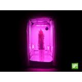 Carpa Cultivo Indoor Homebox - Up! Growshop