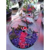 Souvenirs- Mini Jardines En Peceras De Vidrio Cactus Suculen