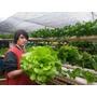 Kit Nutrientes P/ 1000l Completa Hidroponia-6 Fertilizantes