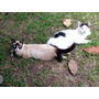 Hermosos Gatos Se Regalan O Se Dan En Adopción.