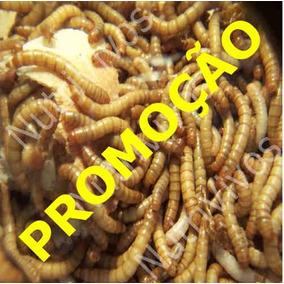 Tenebrio Molitor - 500 Larvas Vivas Pronta Entrega