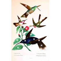 Lienzo Tela Aves De México Colibries 2 1875 80 X 50 Cm Arte