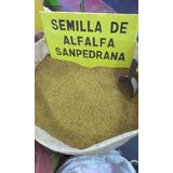 Semilla De Alfalfa