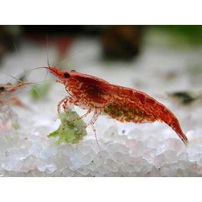 Red Cherry X10 (neocaridina Heteropoda) Envíos A Domici