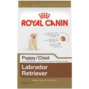 Labrador Puppy 30 - Cachorros Labrador Retriever De 2 Meses