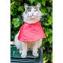 Collares Isabelinos Para Gatos - De Tela - Hecho A Mano