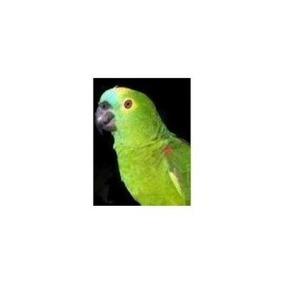 Cd Assovios 5 Músicas 99 Falas Papagaios Calopsita Currupião