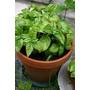 Plantines Hortícolas Y Aromáticos