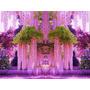 5 Sementes De Lindas Flores Wisteria Glicínias Rosas Raras