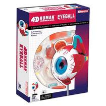 4d Master Modelo Anatomico Ojo Humano 4d Vision