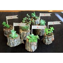 Souvenir Troncos Con Cactus Y Suculentas